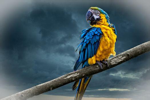 Бесплатные фото Попугай ара,птица,птица на шесте,небо,тучи