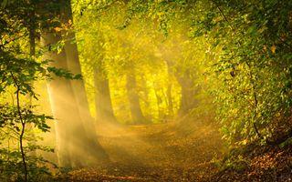 Фото бесплатно осень, листья, настроение