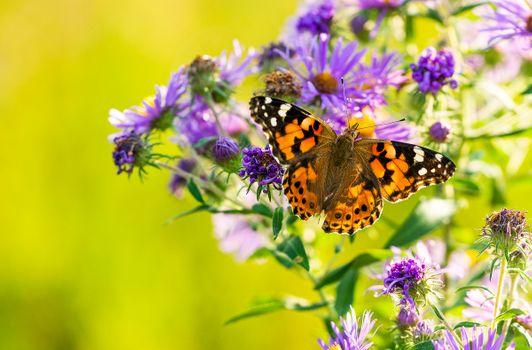 Заставки Бабочка, Бабочка на цветке, насекомых