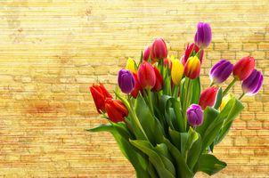 Фото бесплатно цветение, тюльпаны, цветок