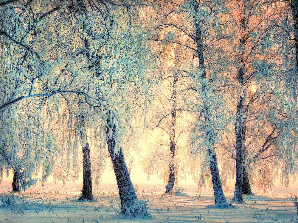 Обои зима, деревья, снег, солнечные лучи, природа, пейзаж на телефон | картинки пейзажи