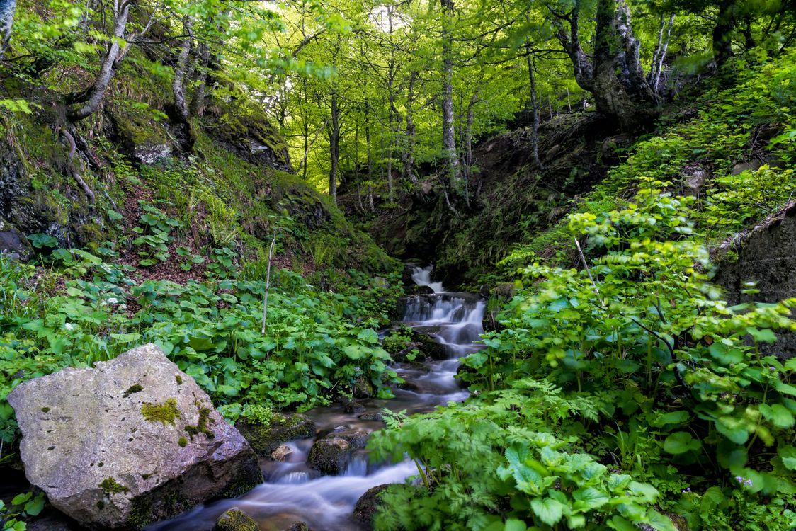 Обои поток, камни, лес картинки на телефон