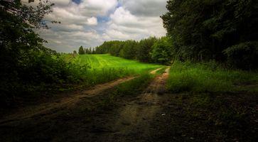 Бесплатные фото поле,дорога,лес,деревья,пейзаж