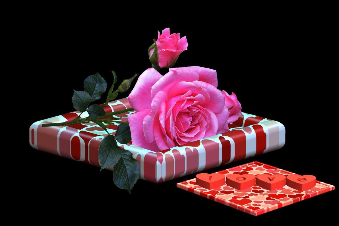 Фото бесплатно Поздравления с днем Святого Валентина, открытка, роза цветок - на рабочий стол
