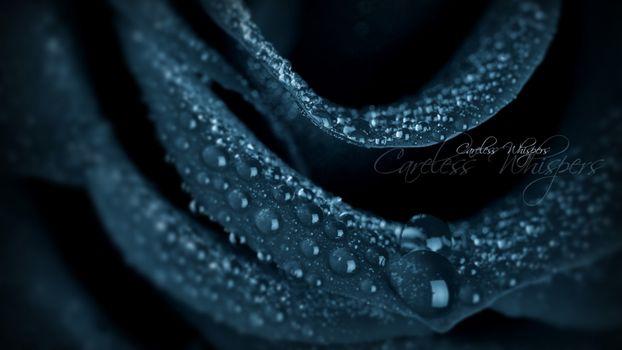 Фото бесплатно роза, лепестки, бутон