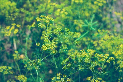Бесплатные фото дерево,природа,лес,трава,растение,луг,солнечный лучик,лист,цветок,листва,зеленый,производить