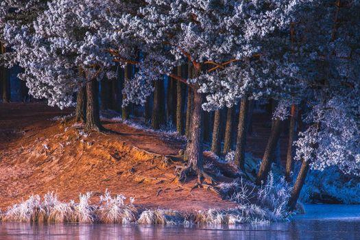Бесплатные фото деревья,водоём,иней,лес,природа,пейзаж