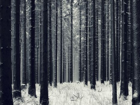 Photo free landscapes, trees, trunks of trees