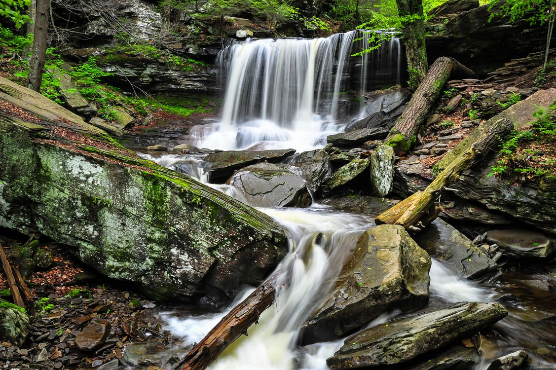 Лес в Пенсильвании · бесплатное фото