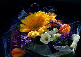 Заставки цветочный, праздничный букет, цветок