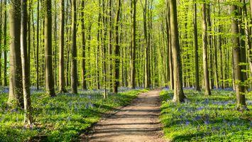 Чудный лес · бесплатное фото