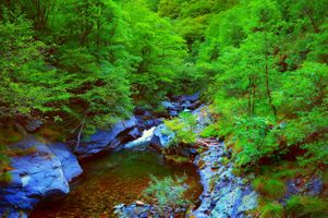 Photo free magical river, forest, stones