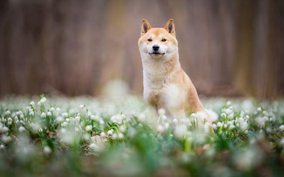Dog snowdrops · free photo