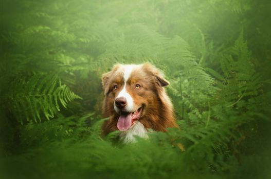 A dog looks out of the bushes · free photo