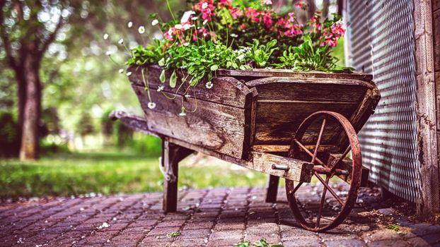 Фото бесплатно Цветы, Ретро, Фотография