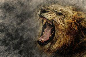 Бесплатные фото лев,хищник,оскал,рёв,зев,клыки,язык