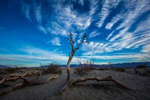 Фото бесплатно Мескит плоские песчаные дюны, пустыня, Калифорния