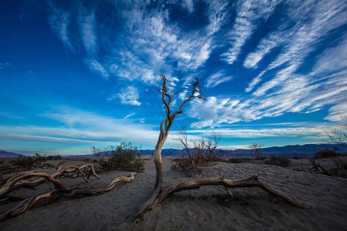 Фото бесплатно Мескит плоские песчаные дюны, пустыня, Калифорния - на рабочий стол