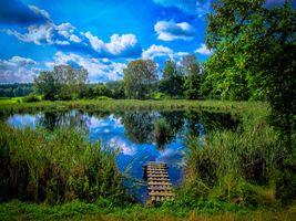 Фото бесплатно озеро, растения, небо