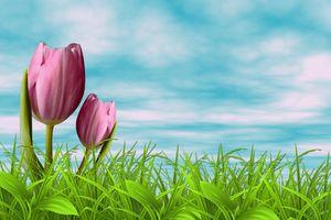 Бесплатные фото поле,трава,тюльпаны,цветы,небо