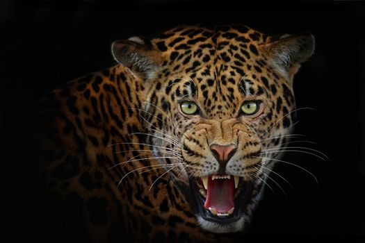 Фото бесплатно леопард, морда, взгляд