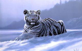 Заставки белый тигр, лежать, снег