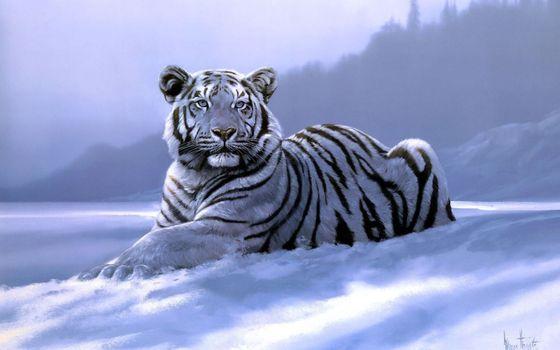 Фото бесплатно белый тигр, лежать, снег