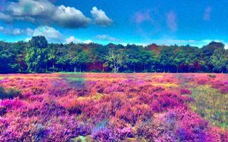 Заставки живопись холст, поле, живописный