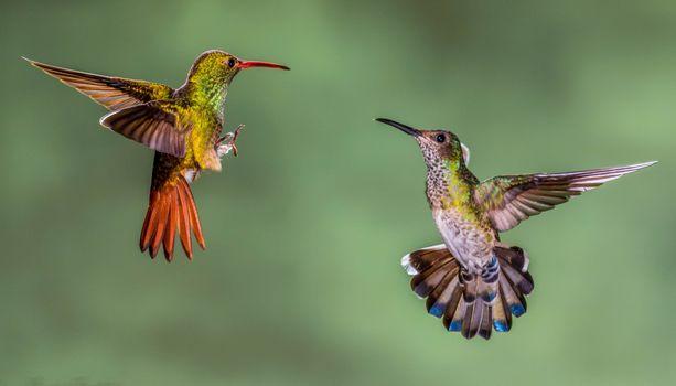 Beautiful photos on the theme of macro, hummingbird