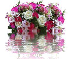 Фото бесплатно флора, цветок, красочный