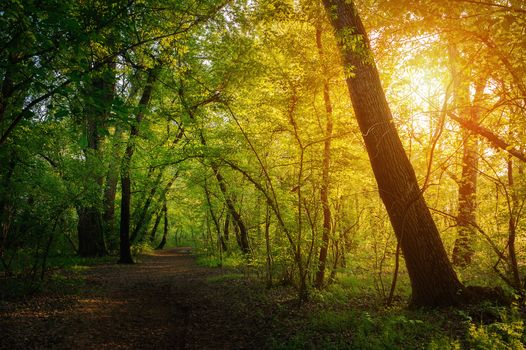 Фото бесплатно солнечный свет, деревья, природа