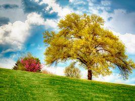 Бесплатные фото осень,поле,холм,трава,дерево,небо,природа