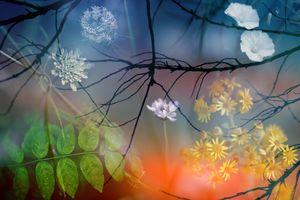 Разнообразие цветов · бесплатное фото