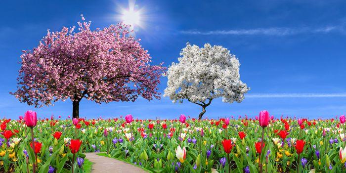 Бесплатные фото природы,пейзаж,сад,весна,сезон,цветы,тюльпаны,нарциссы,osterglocken,крокус,дерево,магнолия
