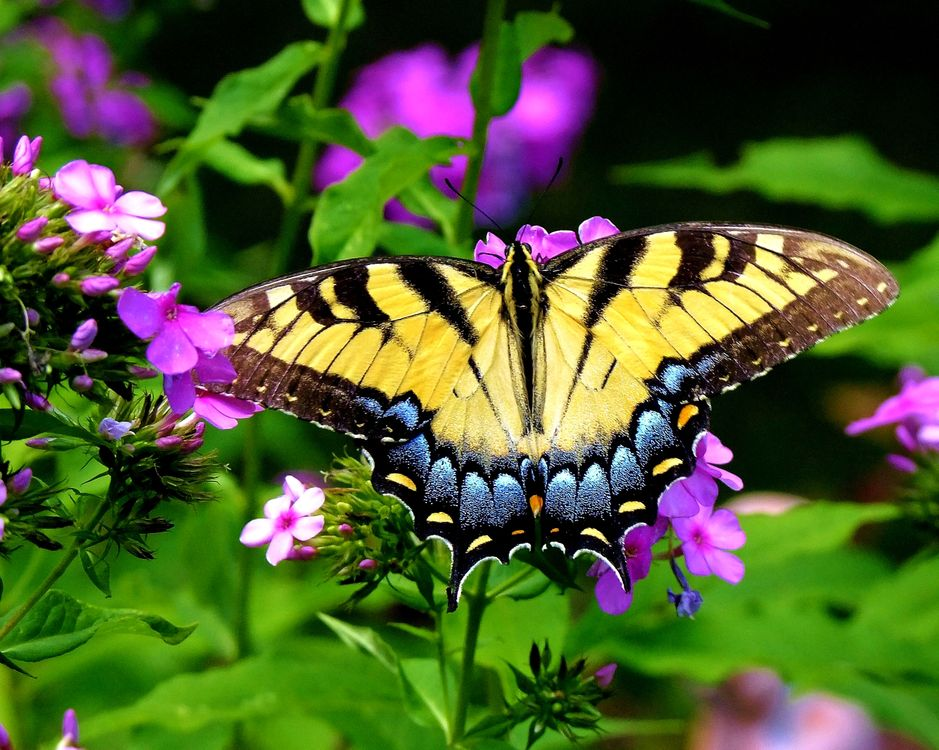 Butterfly in full screen · free photo