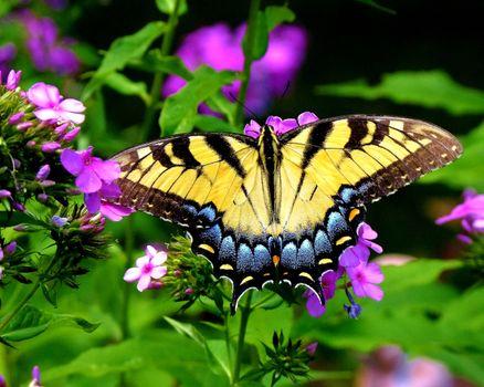 Butterfly in full screen