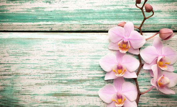 Фото бесплатно ветка, орхидеи, розовые