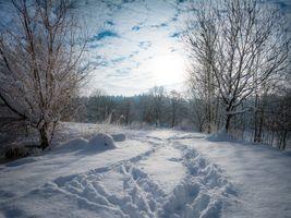Заставки зима, следы, деревья