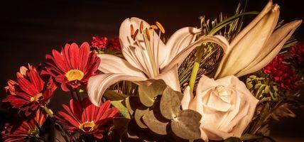 Крупные цветы · бесплатное фото