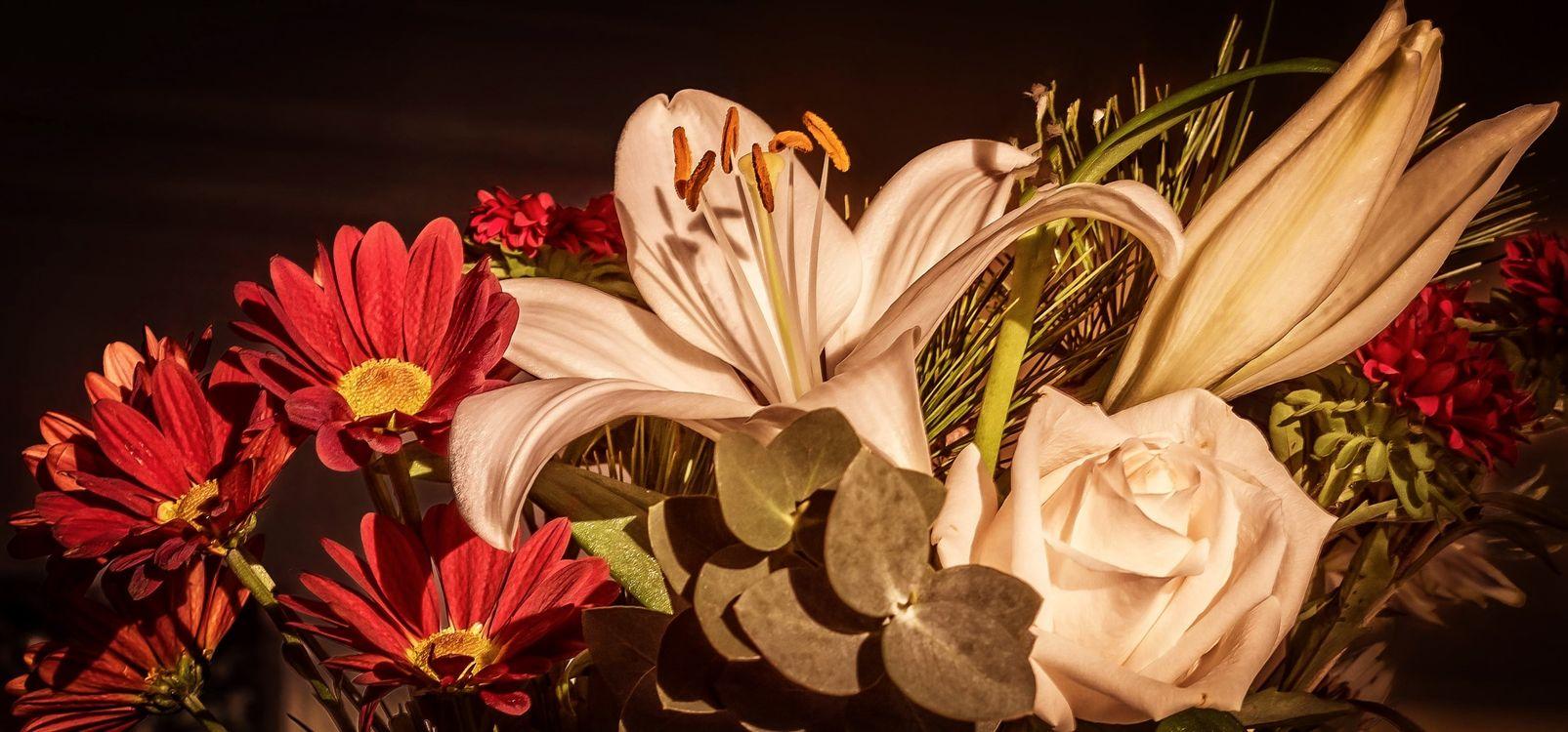 Крупные цветы · бесплатная заставка