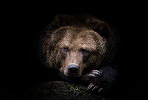 Заставки Камчатский Медведь, хищник, бурый медведь