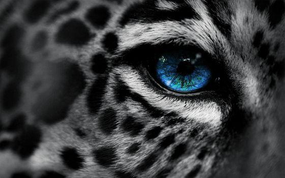 Фото бесплатно черный, синий, глаз