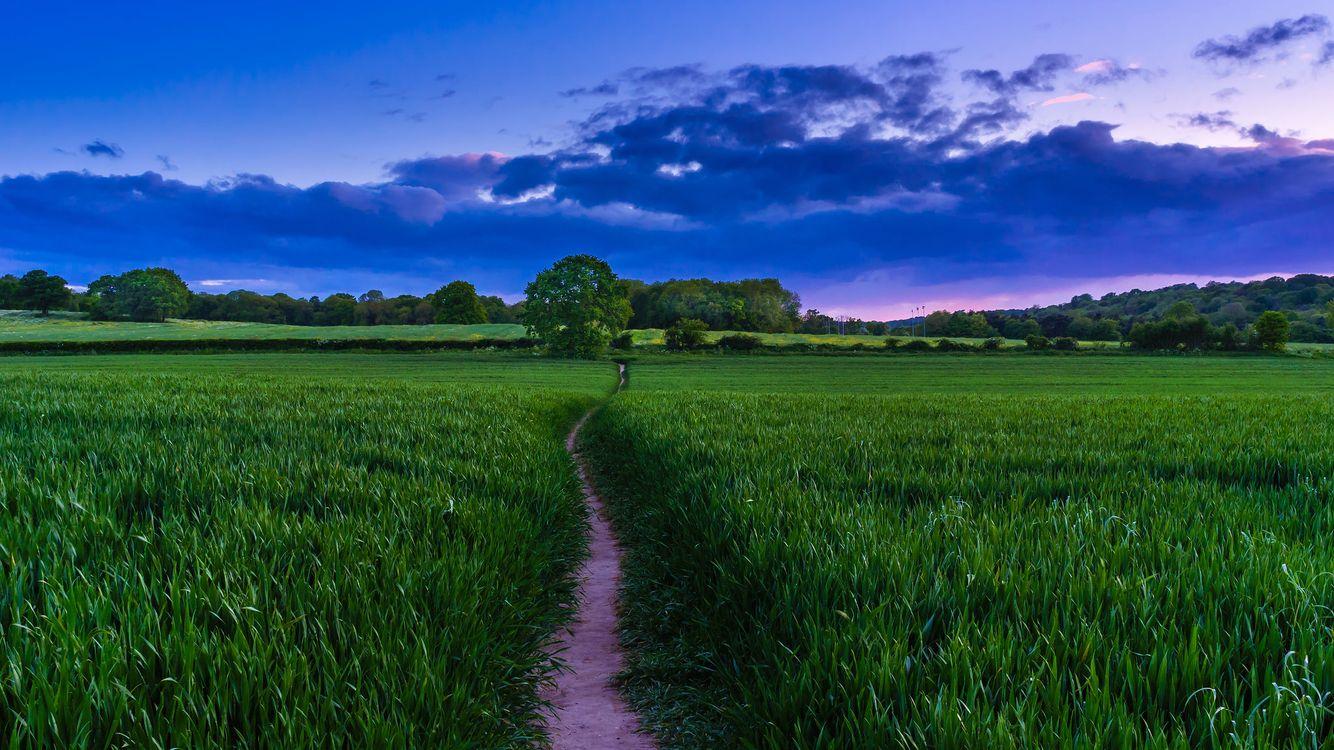 Фото бесплатно пейзаж, трава, закат деревья - на рабочий стол