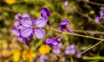 Фото бесплатно фиолетовый, альт, дикий цветок