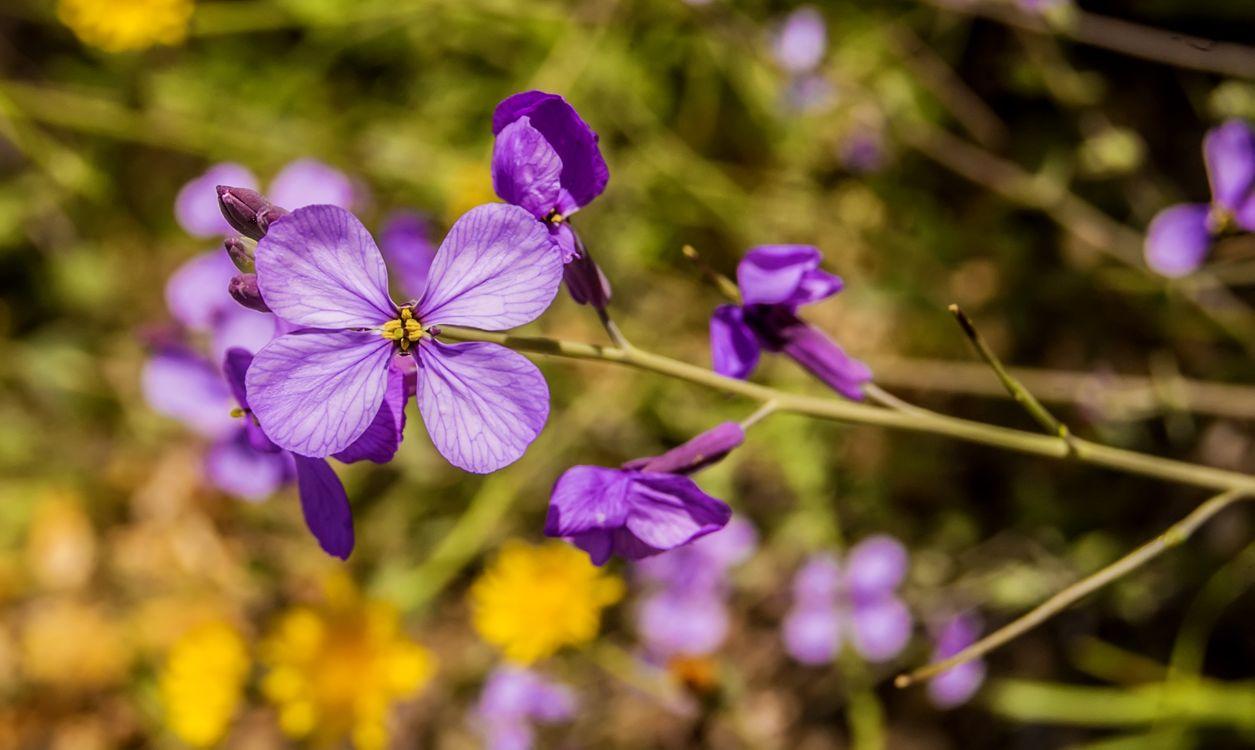 Photos for free purple, viola, wild flower - to the desktop