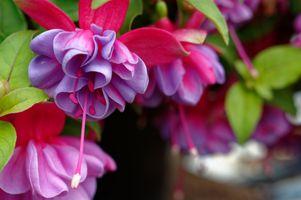 Фото бесплатно растение, изящная, грациозная