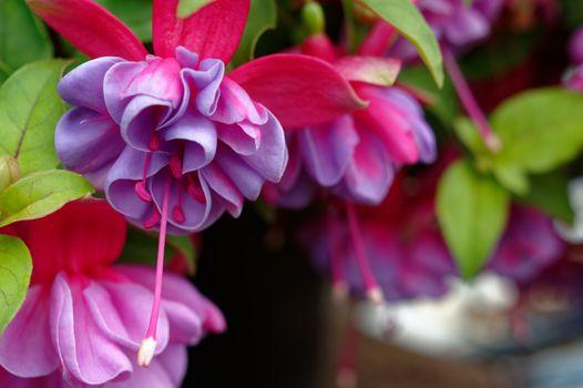 Photo free plant, sleek, graceful