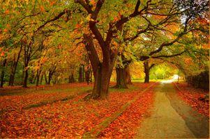 Фото бесплатно осень, цвета осени, природа