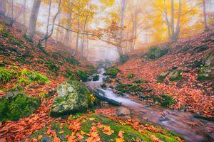 Бесплатные фото осень,река,туман,лес,деревья,камни,мох
