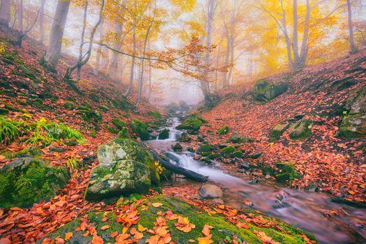 Photo free autumn, river, fog